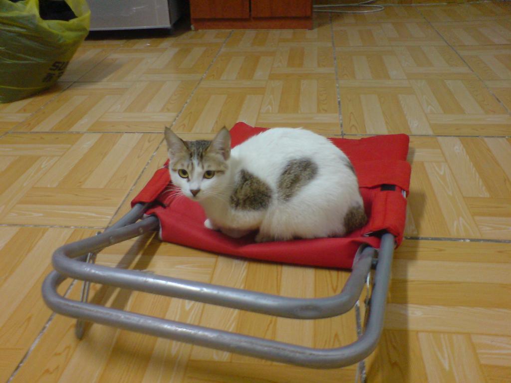 各位家中有母猫kc过的大侠进来一下 一地口水 一个爱猫爱流浪猫的社