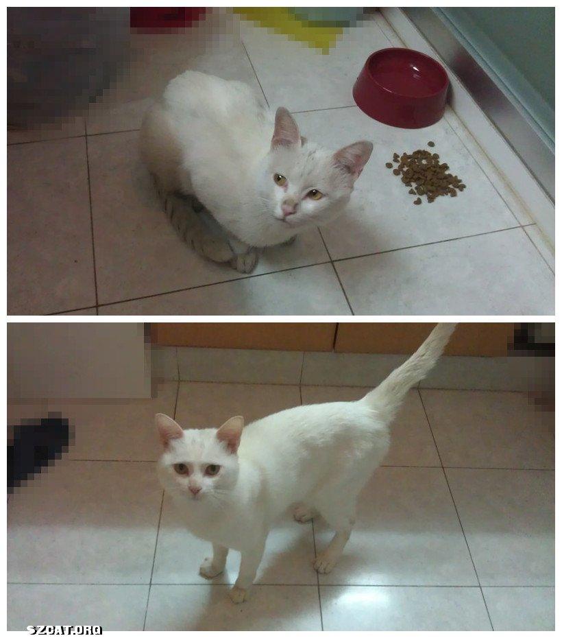 女生抱白猫头像