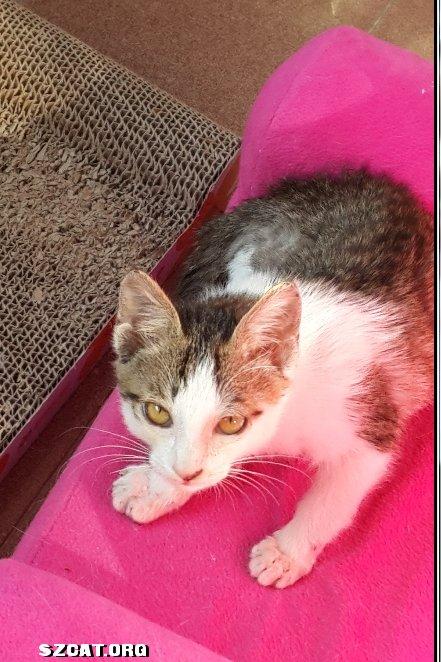 壁纸 动物 猫 猫咪 小猫 桌面 441_662 竖版 竖屏 手机