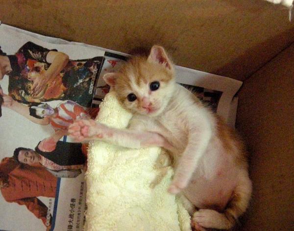超可怜!高难度!小小奶猫找最爱妈妈!