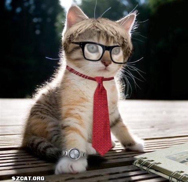 高清qq名片背景图片动物猫