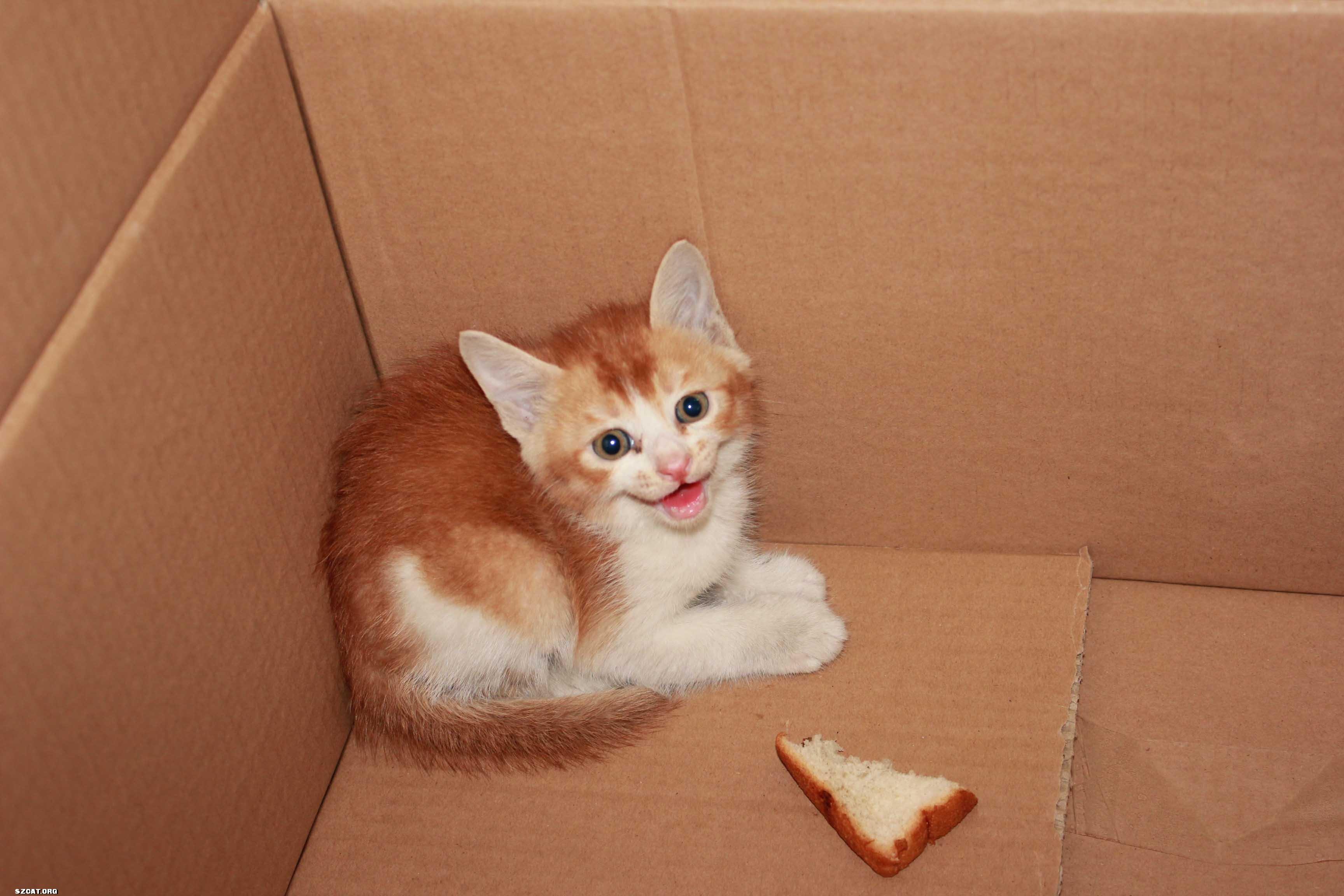 高清可爱的小猫猫iphone3