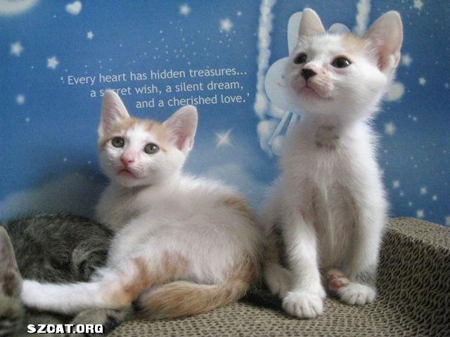 上背着个猫爪印,    三色猫