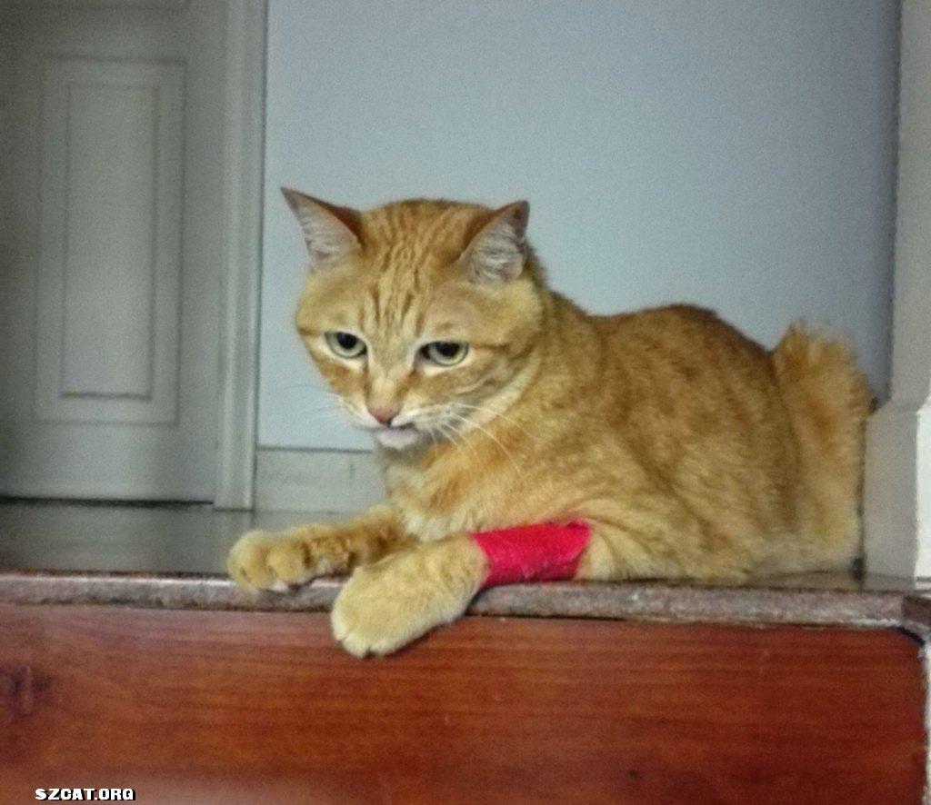 basten肾脏出了大问题,老猫健康一定不能大意啊!(6.27