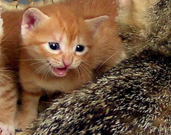 朋友的猫猫绝育手术后死去,好可怜! (1/8)
