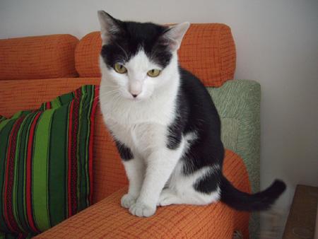诚心领养黑白小猫猫``