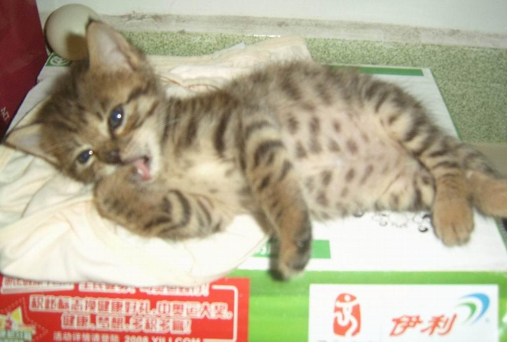 壁纸动物猫猫咪小猫桌面1000_675
