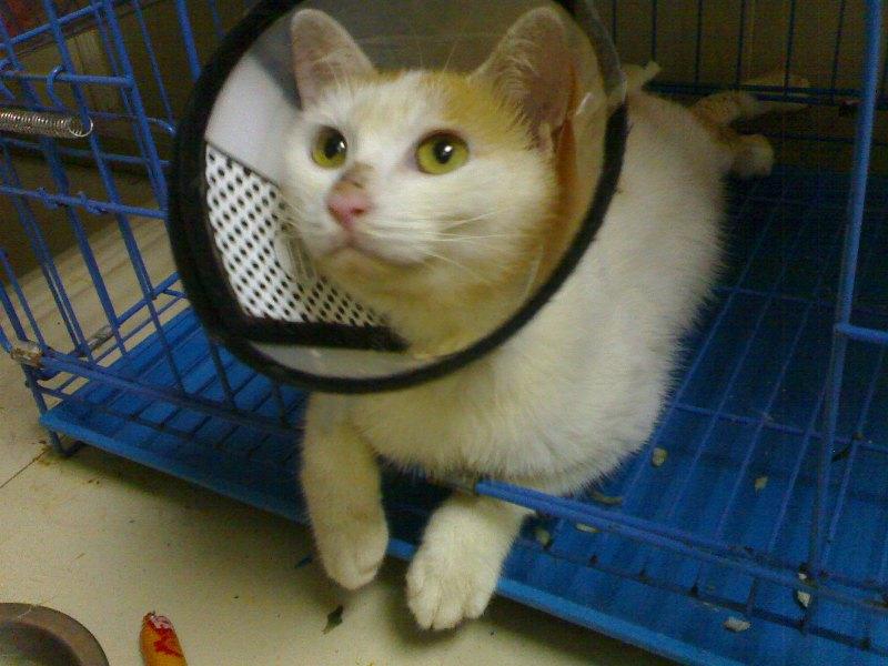 可怜的小猫,他的腿断了,要怎么办才好~(有新相片