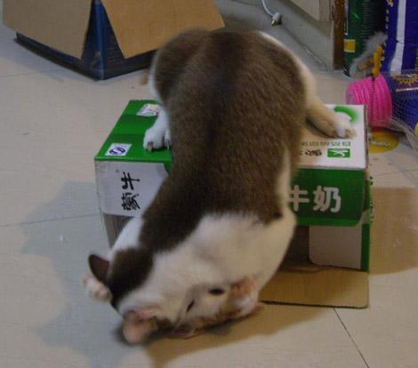 可爱动物纸箱头像