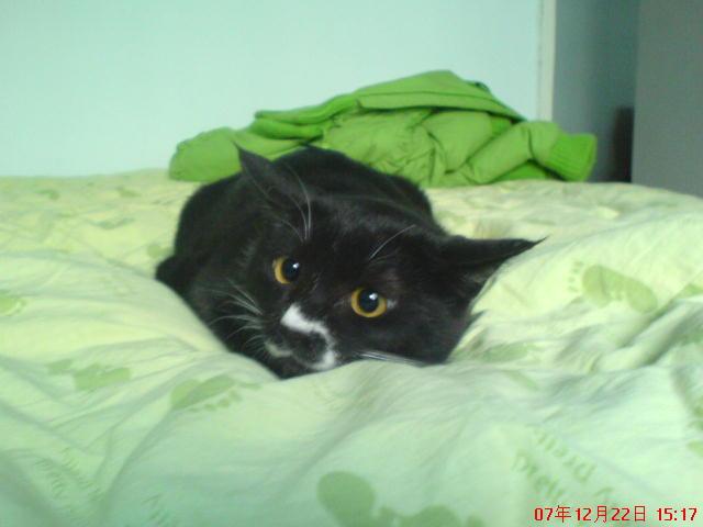 其实猫咪有些面部表情是很明显的,比如说瞪视,猫咪瞳孔放大,这就