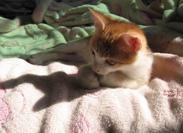 可爱的黄虎斑小土猫--孙小美