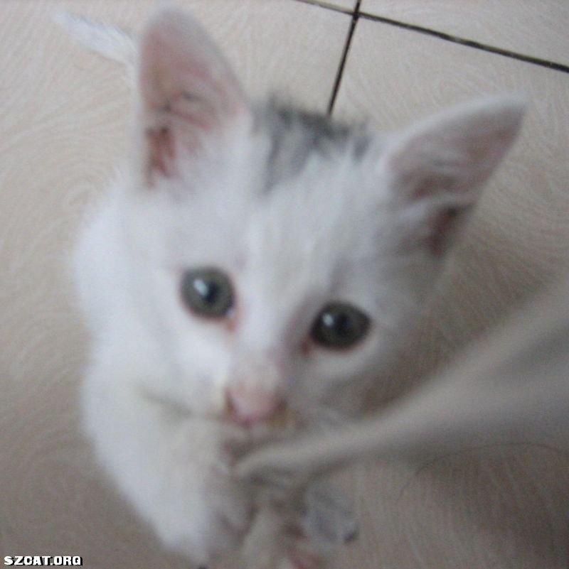 被遗弃的雪中送炭的小白猫找bb