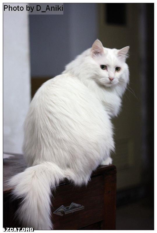 壁纸 动物 猫 猫咪 小猫 桌面 539_800 竖版 竖屏 手机