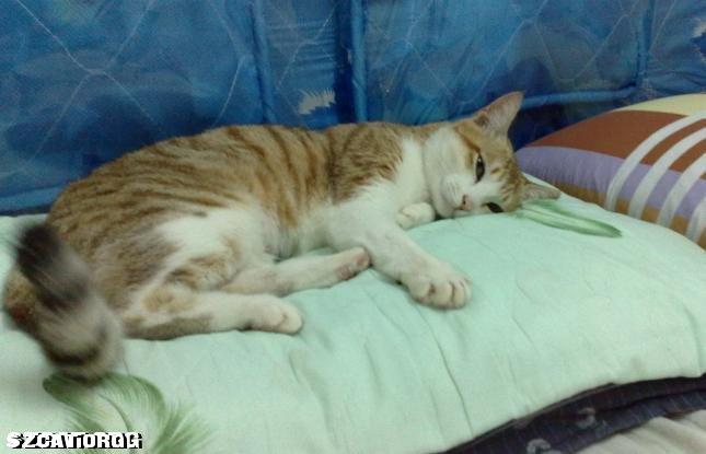 累趴下小猫的可爱图片