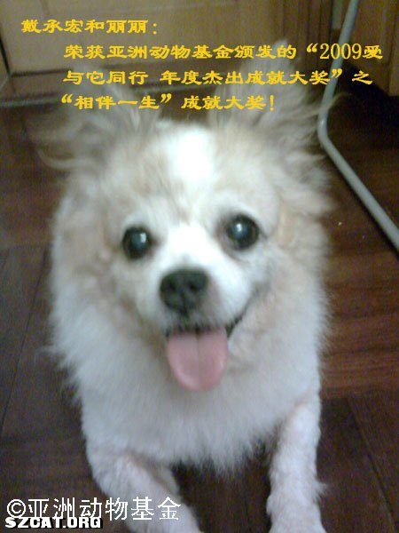 """全国十大城市热选""""2009伴侣动物年度大奖""""深圳站十只"""