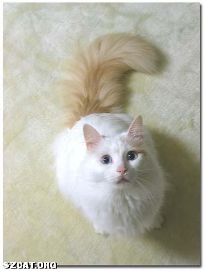 可爱猫咪伸爪手机壁纸