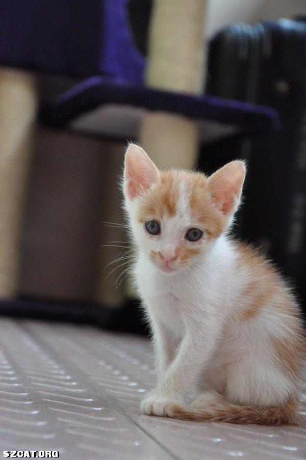 黄白一个多月小猫找家了(超可爱!照片多多