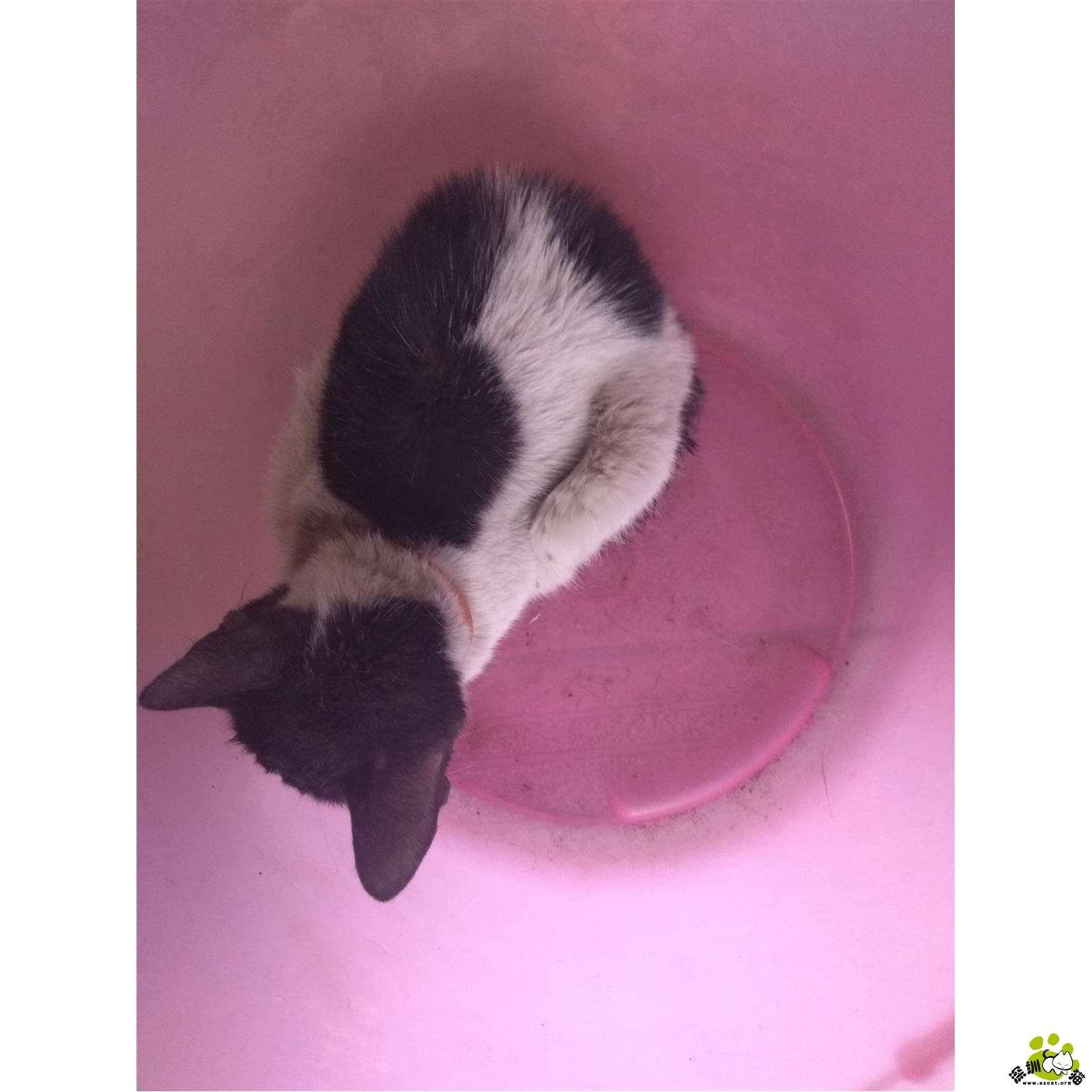 简笔画猫一个叠一个